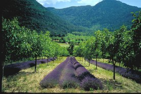 Example of agroforestry concept
