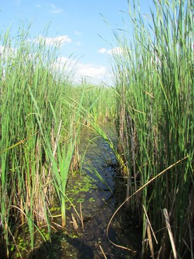Ancient marshes and reedbed benefit from water retention