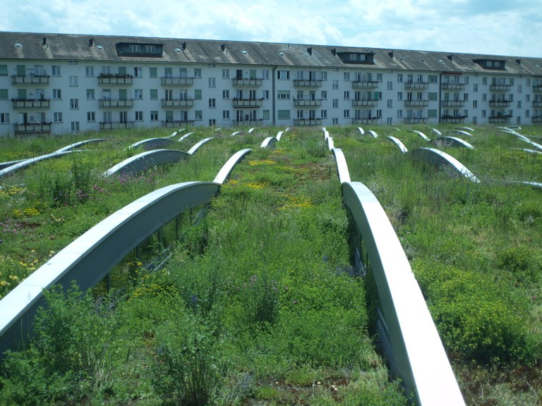 Green Roofs In Basel Switzerland Combining Mitigation And