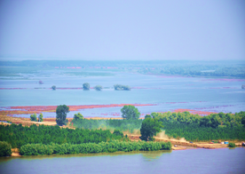 The agriculture polder at Mahmudia 2 months after the end of the restoration project