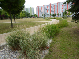 Pilot urban greening project in Trnava (3)